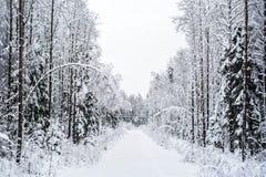 Route d'arbre de neige de forêt d'hiver Photographie stock libre de droits