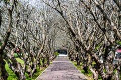 Route d'arbres en parc Images stock