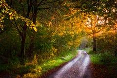 Route d'Autmumn Photographie stock libre de droits