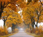 Route d'automne. Photographie stock