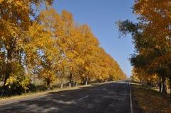 Route d'automne photo libre de droits