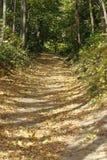 Route d'automne au bois Photo libre de droits