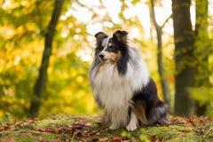 Route d'automne avec les arbres colorés Photographie stock