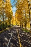 Route d'automne en stationnement Arbres d'automne en parc photos libres de droits
