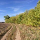 Route d'automne près des plantations Image libre de droits