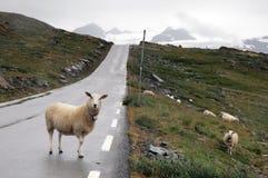 Route d'automobile d'asphalte Image stock