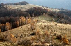 Route d'enroulement dans la forêt de bouleau Image stock