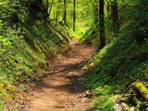Route d'enroulement dans les bois Photo libre de droits