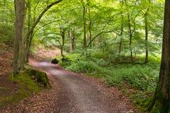 Route d'enroulement par la forêt Image libre de droits