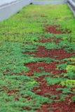 Route d'herbe Photographie stock libre de droits