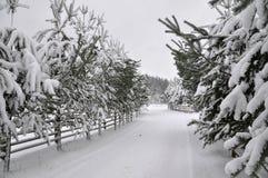 Route d'hiver avec une barrière en bois et des sapins des deux côtés de la route image stock