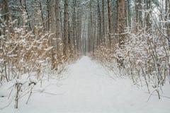 Route d'hiver dans la forêt Photographie stock