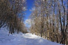 Route d'hiver dans le jour ensoleillé d'espace libre neigeux de forêt d'Adygea, un plateau de Lago-Naki Photo stock