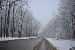 Route d'hiver dans les bois Image libre de droits