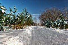 Route d'hiver dans une forêt de pin, coucher du soleil, les rayons du soleil photo stock