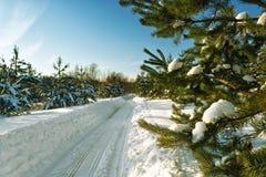 Route d'hiver dans une forêt de pin, coucher du soleil, les rayons du soleil images stock