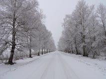 Route d'hiver et beaux arbres neigeux Photographie stock libre de droits