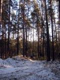 Route d'hiver par la forêt Image libre de droits