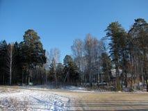 Route d'hiver par la forêt Photos libres de droits