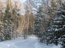 Route d'hiver par la forêt Photographie stock libre de droits