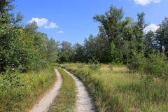 Route d'ornière dans la forêt Photographie stock