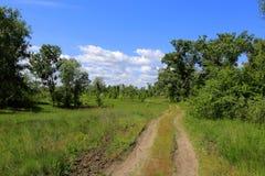 Route d'ornière dans la forêt Photos libres de droits