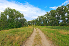 Route d'ornière dans la forêt d'été Image libre de droits