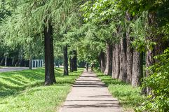 Route dans Green Park Moscou, Russie photo stock
