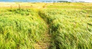 Route dans l'herbe Image stock