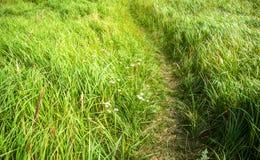 Route dans l'herbe Images libres de droits