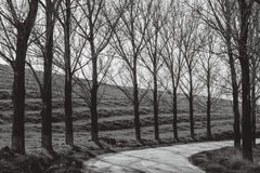 Route dans la campagne Photo libre de droits