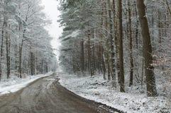 Route dans la forêt Photographie stock libre de droits