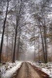 Route dans la forêt Image libre de droits