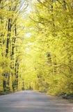 Route dans la forêt Photo libre de droits