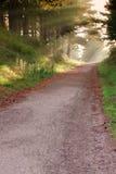 Route dans la forêt. Photo libre de droits