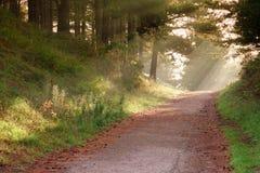 Route dans la forêt. Images stock