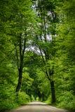 Route dans la forêt Image stock
