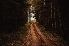 Route dans la forêt Photographie stock