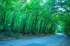 Route dans la forêt Photos libres de droits