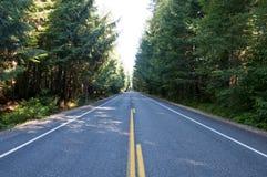 Route dans la forêt images libres de droits