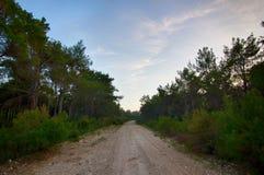 Route dans la forêt avant lever de soleil photographie stock