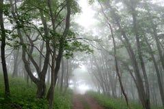 Route dans la forêt brumeuse de mystère Photographie stock