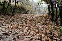 Route dans la forêt couverte de feuilles sèches Images stock