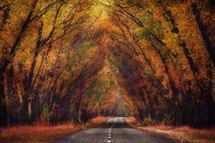Route dans la forêt d'automne Photos stock