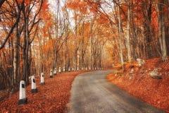 Route dans la forêt d'automne Image libre de droits