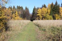 Route dans la forêt d'automne Images libres de droits