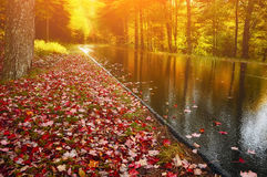 Route dans la forêt d'automne, lumineux, ensoleillée Photographie stock libre de droits
