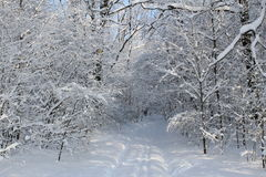 Route dans la forêt d'hiver image libre de droits