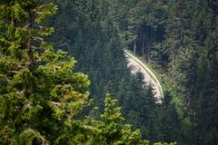 Route dans la forêt de montagne photo stock