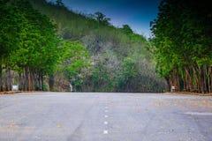 Route dans la forêt humide Images stock